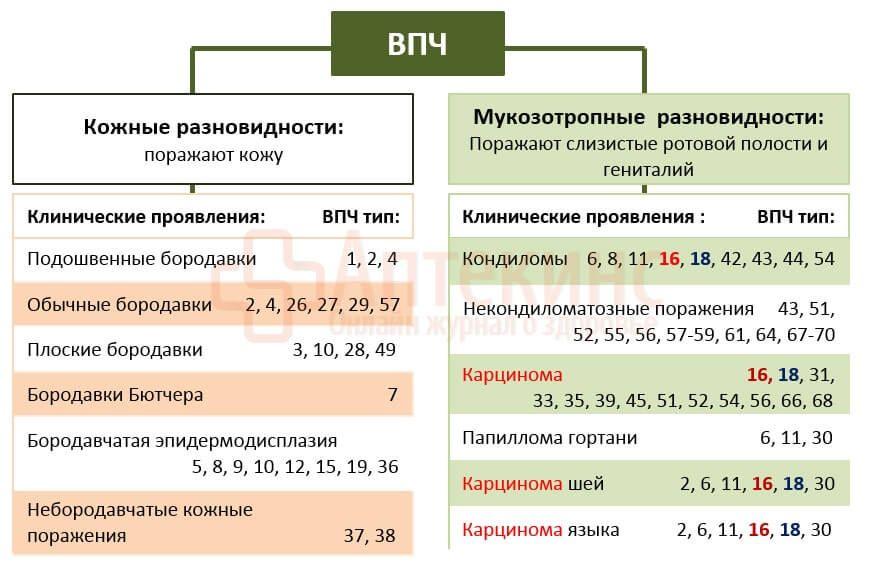 ВПЧ 16 и 18 типа